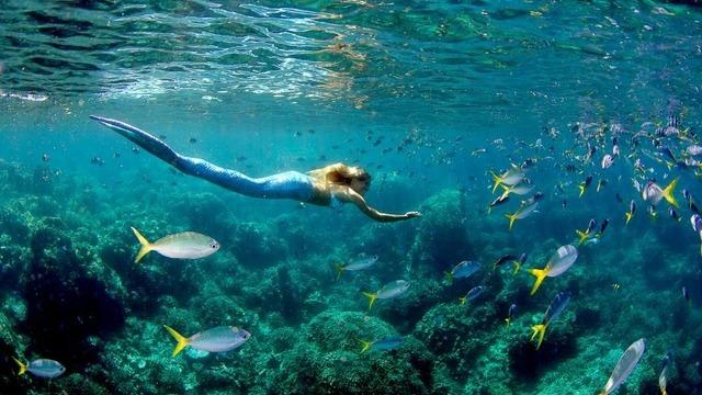 Leto plave sirene